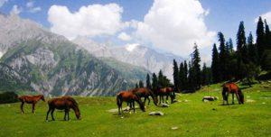 Exotic-Kashmir-Tours