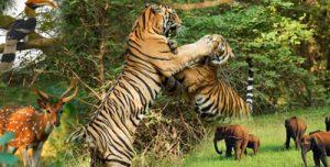 India-Wildlife-Tours
