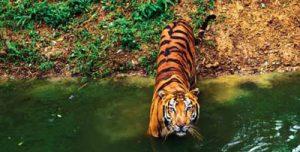 Rajasthan-Wildlife-Tour