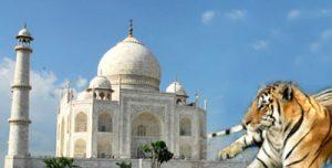 Rajasthan-Wildlife-with-Tajmahal
