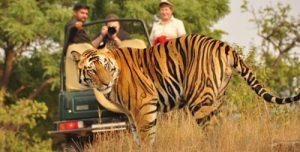 Tiger-Wildlife-Tour